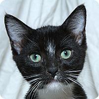 Adopt A Pet :: Dylan V - Sacramento, CA