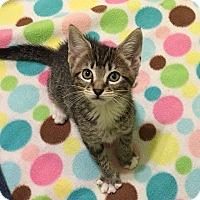 Adopt A Pet :: Suki - Tampa, FL
