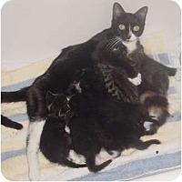 Adopt A Pet :: Oreo - Franklin, NC