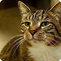 Adopt A Pet :: Shawna - Lombard, IL