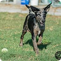 Adopt A Pet :: Penny - El Campo, TX