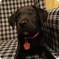 Adopt A Pet :: Valentine - Marlton, NJ
