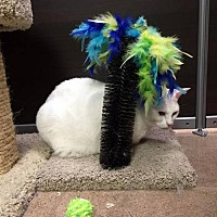 Adopt A Pet :: Powder - Chandler, AZ