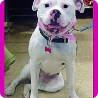Adopt A Pet :: Lola - Mt. Clemens, MI
