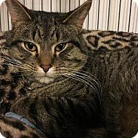 Adopt A Pet :: Dwight - Hanna City, IL
