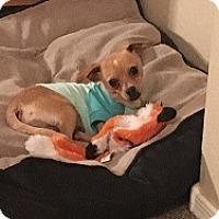 Adopt A Pet :: Maloy - Mesa, AZ