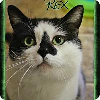 Adopt A Pet :: Rex - Shippenville, PA
