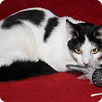 Adopt A Pet :: Spot - Marietta, OH
