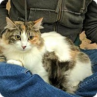 Adopt A Pet :: Christy - Encinitas, CA