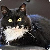 Adopt A Pet :: Eva Stone - Marlborough, MA