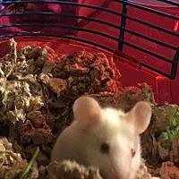 Adopt A Pet :: Moe - Bayville, NJ