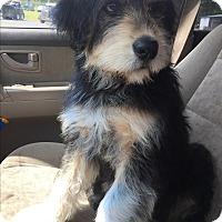 Adopt A Pet :: Moose - Kittery, ME