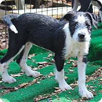Adopt A Pet :: Thelma - Bernardston, MA