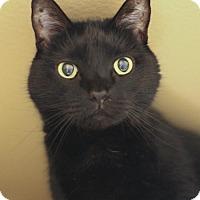 Adopt A Pet :: Coco (and Sophie) - Marlborough, MA