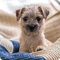 Adopt A Pet :: Topaz - Oakland, CA
