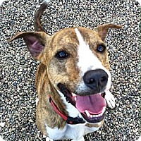 Adopt A Pet :: Deuce--still available May 16 - Valley Springs, CA