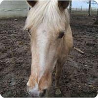 Adopt A Pet :: Sunny - Dewey, IL