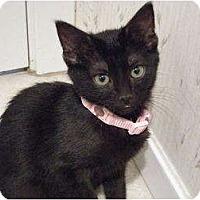 Adopt A Pet :: Lucy-fuzzy bundle of fun! - Hurst, TX
