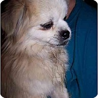 Adopt A Pet :: Pixie - Honaker, VA