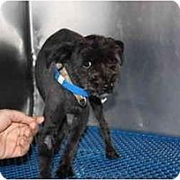 Adopt A Pet :: Barney - Toronto/Etobicoke/GTA, ON
