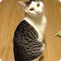 Adopt A Pet :: Paws - Hyde Park, NY
