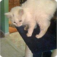 Adopt A Pet :: Miracle - Mobile, AL