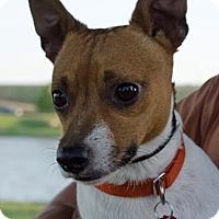 Adopt A Pet :: Bean in Denton - Dallas/Ft. Worth, TX