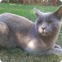 Adopt A Pet :: Gilderoy - Lorain, OH