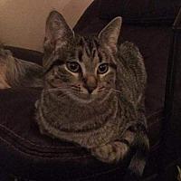 Adopt A Pet :: May - Columbus, OH