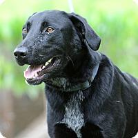 Adopt A Pet :: Baxter - SOUTHINGTON, CT