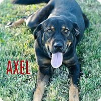 Adopt A Pet :: Axel - Columbia, TN