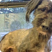 Adopt A Pet :: Mitchell (Chipped)- adopted - Decatur, GA