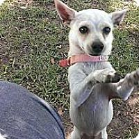 Adopt A Pet :: Olivia - Spring Branch, TX