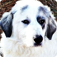 Adopt A Pet :: TUCKER Stunning Pyre Baby - Wakefield, RI