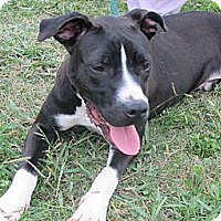 Adopt A Pet :: AXEL - Glastonbury, CT