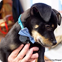 Adopt A Pet :: Monty - Marietta, GA