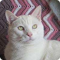 Adopt A Pet :: Basile - Verdun, QC