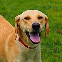 Adopt A Pet :: Lucie - Washburn, MO