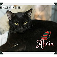 Adopt A Pet :: Alicia - Fallbrook, CA