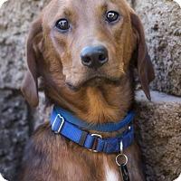 Adopt A Pet :: Billy - El Cajon, CA
