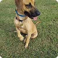 Adopt A Pet :: Houdini - New Braunfels, TX