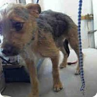 Adopt A Pet :: Petunia - Morgan Hill, CA