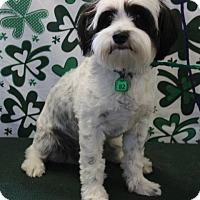 Adopt A Pet :: EINSTEIN - Gustine, CA