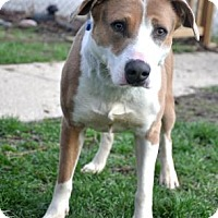 Adopt A Pet :: Ashe - Northbrook, IL
