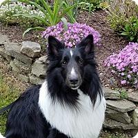 Adopt A Pet :: Dolly - Stony Brook, NY