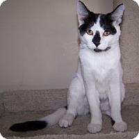 Adopt A Pet :: K-Sitka3-Valentine - Colorado Springs, CO