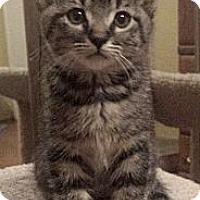 Adopt A Pet :: Loki - Irvine, CA