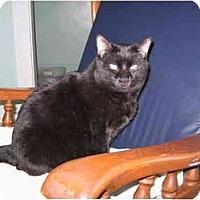 Adopt A Pet :: Brian - North Boston, NY