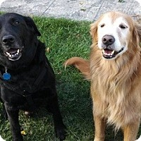 Adopt A Pet :: Chance and Buddy - New Canaan, CT