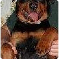 Adopt A Pet :: Sophie - Alliance, NE